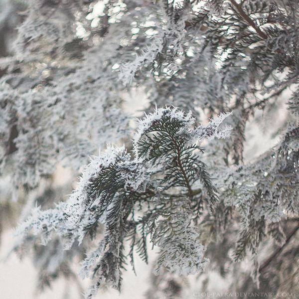 22.33 frosty