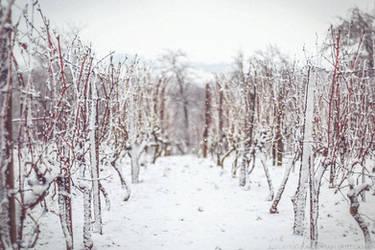 22.38 winter feeling by cloe-may
