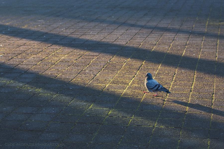 23.8 jumping shadows by cloe-patra
