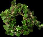 Ivy Round 1
