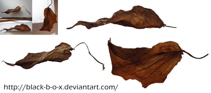 Brown Leaves Stock 1