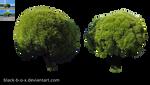 Trees stock 1