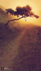 Path by Black-B-o-x