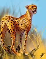 Cheetah by TehChan
