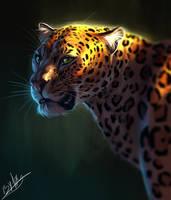 Leopard by TehChan
