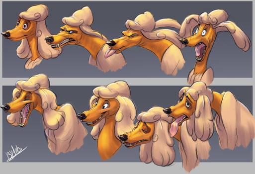 Poodle_Facial Expressions
