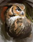 OwlSpeedPainting