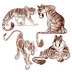Tiger Designs study