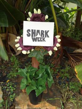 Shark Week 2015