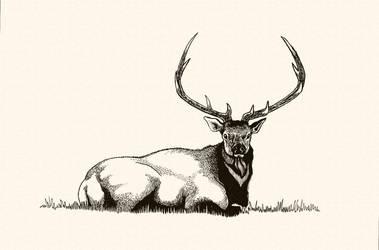 'Bull Elk in Repose' by TADASHI-STATION