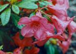 'Pretty in Pink' by TADASHI-STATION