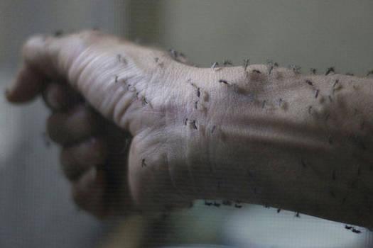 Zika messengers