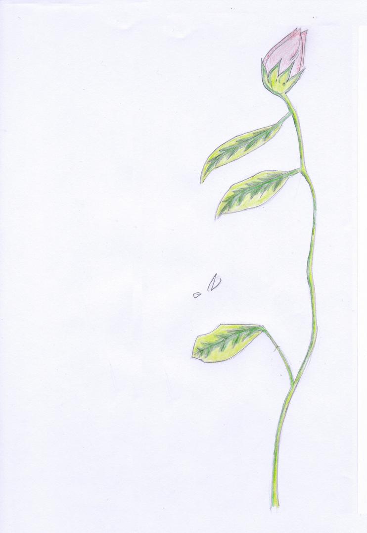 La flor by GN58