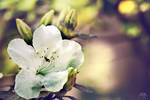 FLOWERS START TO BLOOM by AlainaBrown