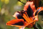 Orange Twist by pluto96