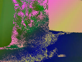 Cat by JuliaSanchezz