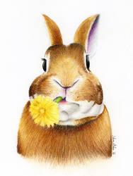 Bunny by SabinasArts
