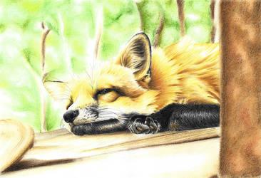 Sleepyfox  by SabinasArts