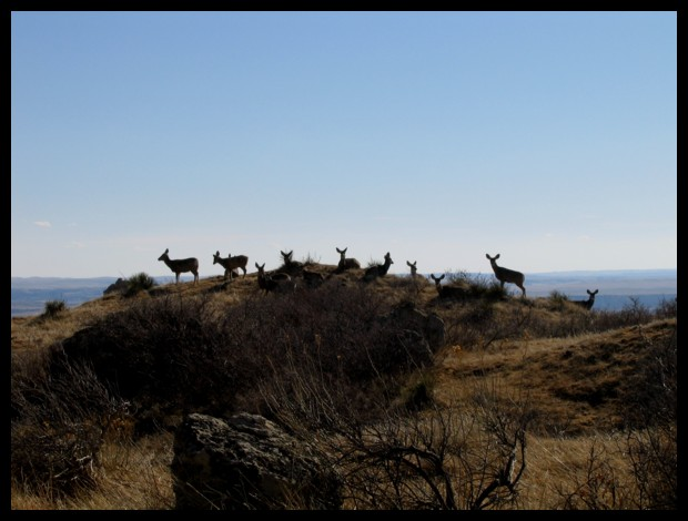 Park Wildlife by Uzumate