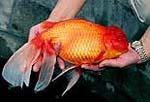 big fish by StevenTEH