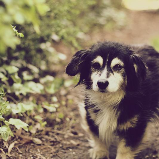Dog 03 by im-G-L-I-T-C-H