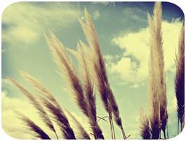 . Autumn afternoon .