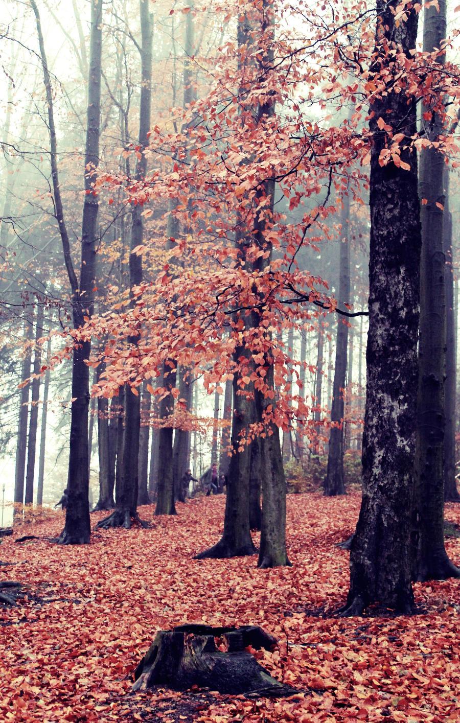 autumn is not gone... by mandarinchenx