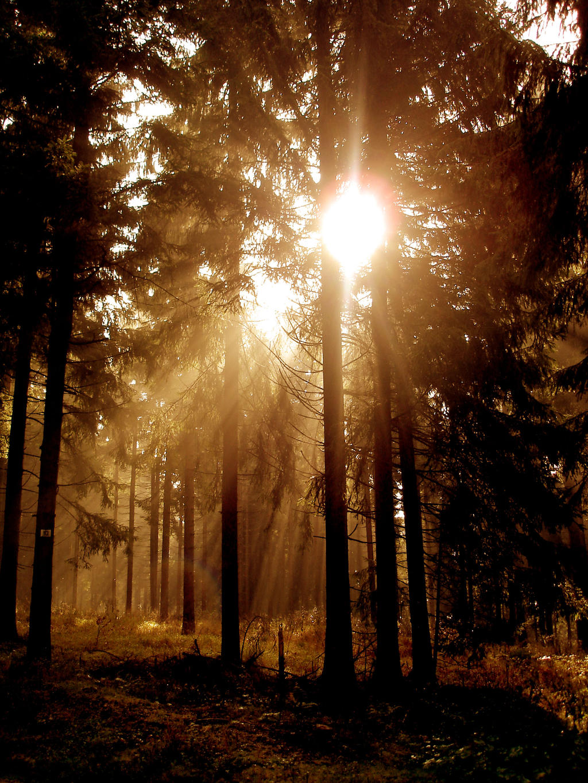 sunny mystery forest by mandarinchenx