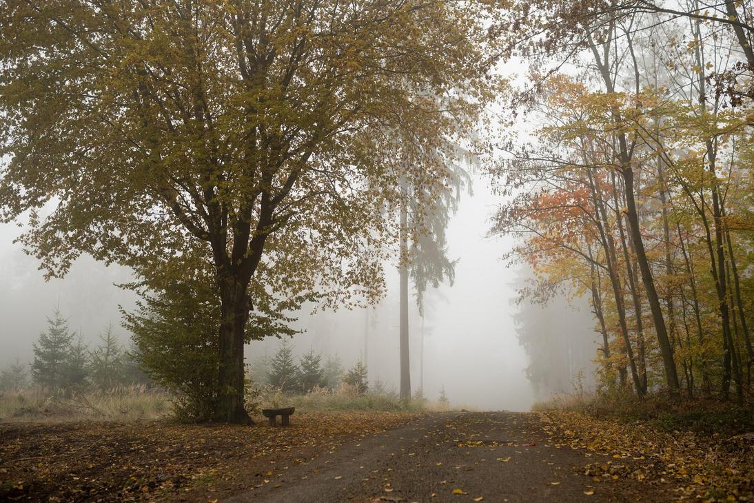 Foggy Autumn by Pepul