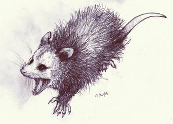 Opossum Practice
