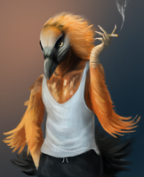 Bearded Vulture by apricotjackal