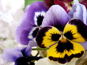 Spring has sprung by Tina-spring