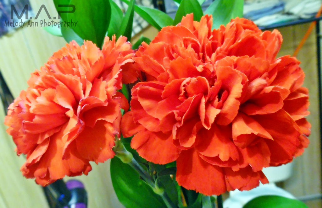 Valentine's Flowers 3 by MelodyAnderson