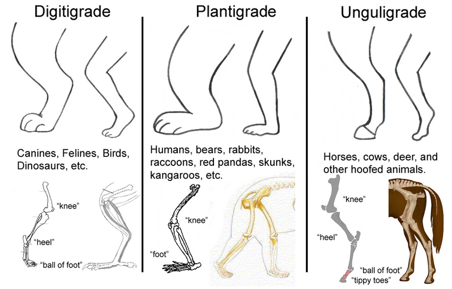 Leg Types - Tutorial by NeonSlushie