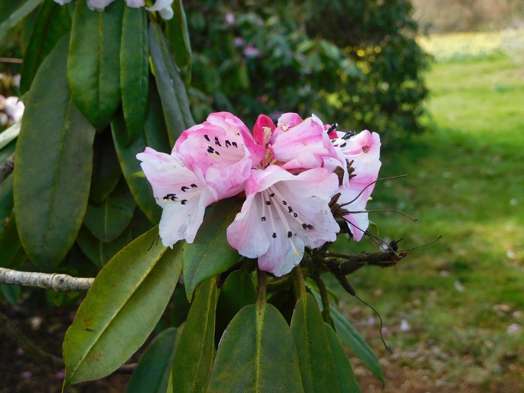 Pink Gradient Flowers by ThePhotographyPotato