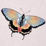 Butterfly flash by himeLILt