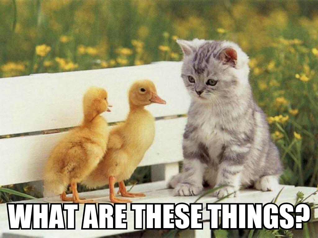 funny_memes__kittens_and_ducks_by_cartoonrockfan93-d70v9t9.jpg