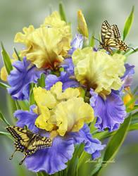 Butterfly's dream by AlenaEkaterinburg