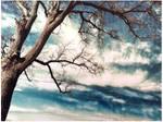 Tree by MauveRocket