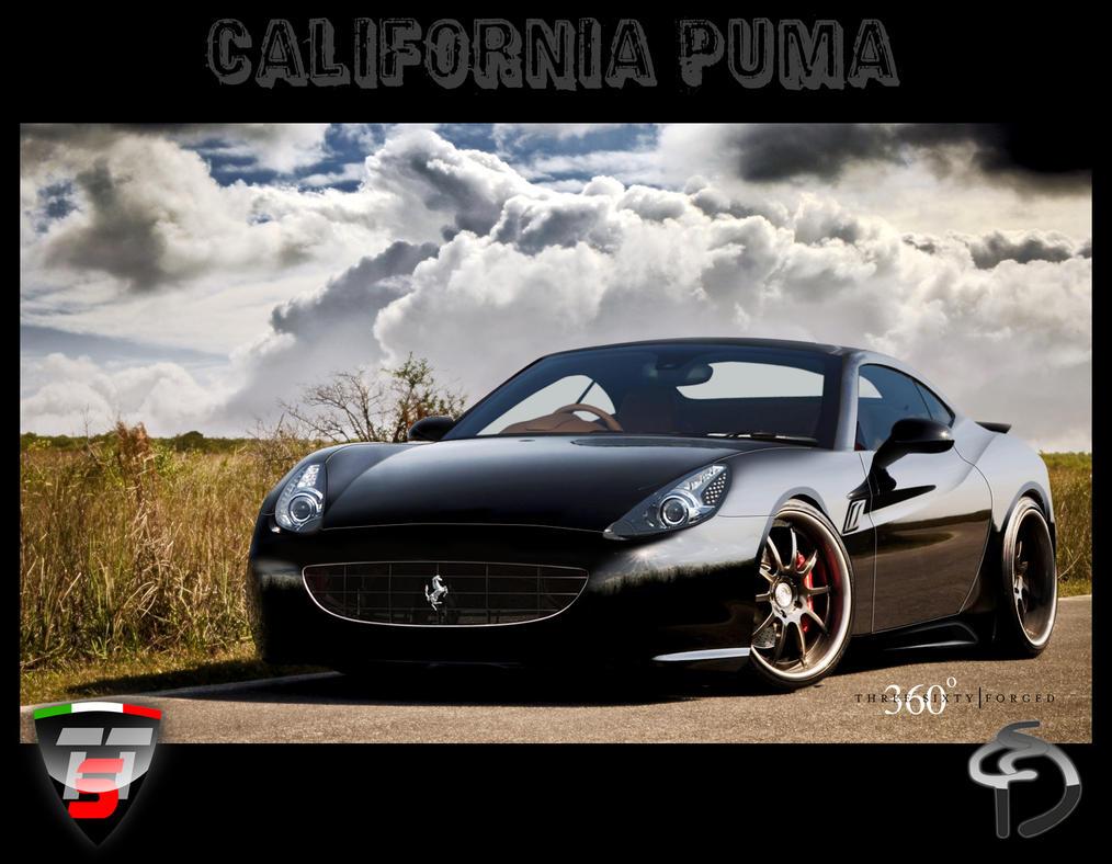 Buy Puma Ferrari Edition Shoes