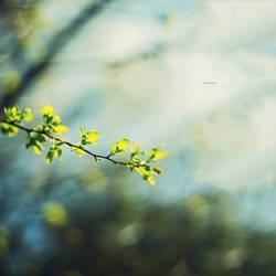930 - spring by SlevinAaron