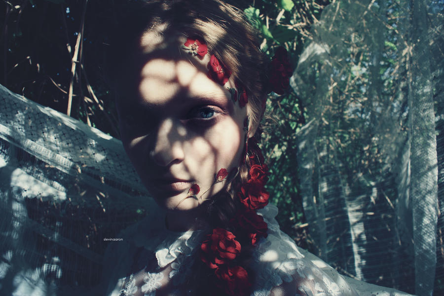 shadows by SlevinAaron