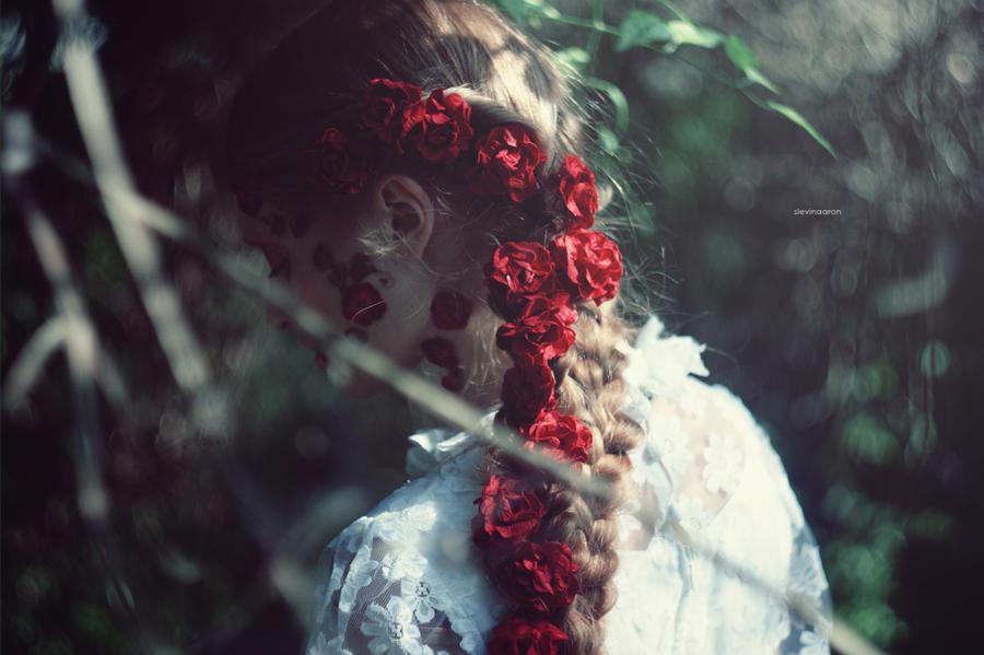 roses by SlevinAaron