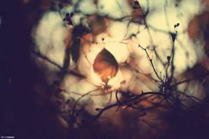 dark blur by SlevinAaron