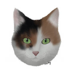 Our cat Lucy by GamingCatsStudio