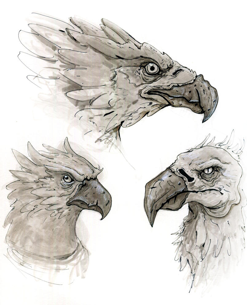 More Bird Heads by TylerJustice