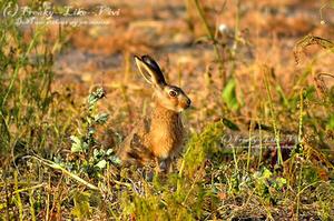 Rabbit by Freaky--Like--Vivi