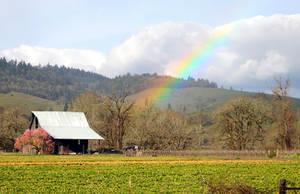 Rainbow by pegrowe62