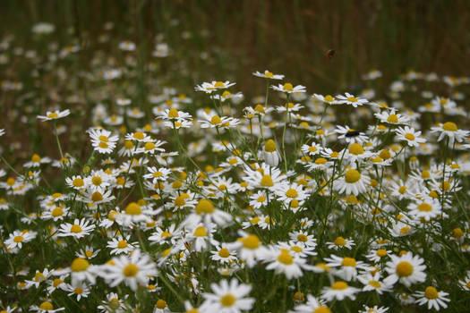 Wildflowers 01