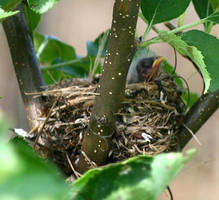 Goldfinch Family 3